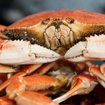 Image of Fresh Crab